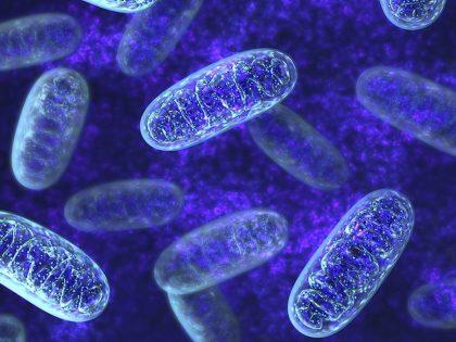 Mighty Mitochondria